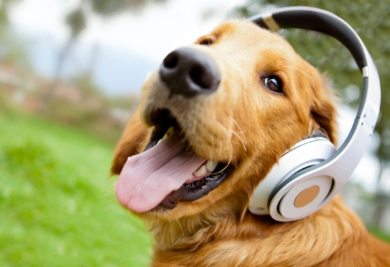 Cute-dog-listening-to-music-1_1